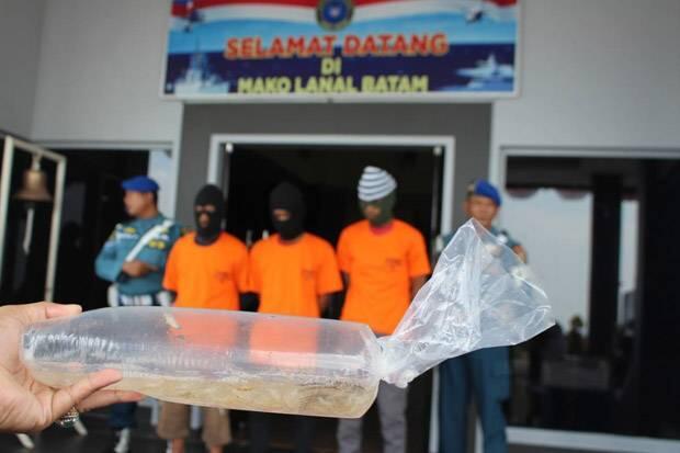 KKP Kembali Gagalkan Penyelundupan Benih Lobster Senilai Rp13,8 Miliar