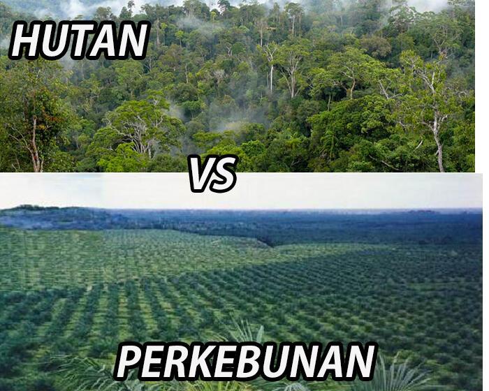 Industri atau Pertanian? Hutan atau Perkebunan? Masa depan bumi perlu dipertimbangkan