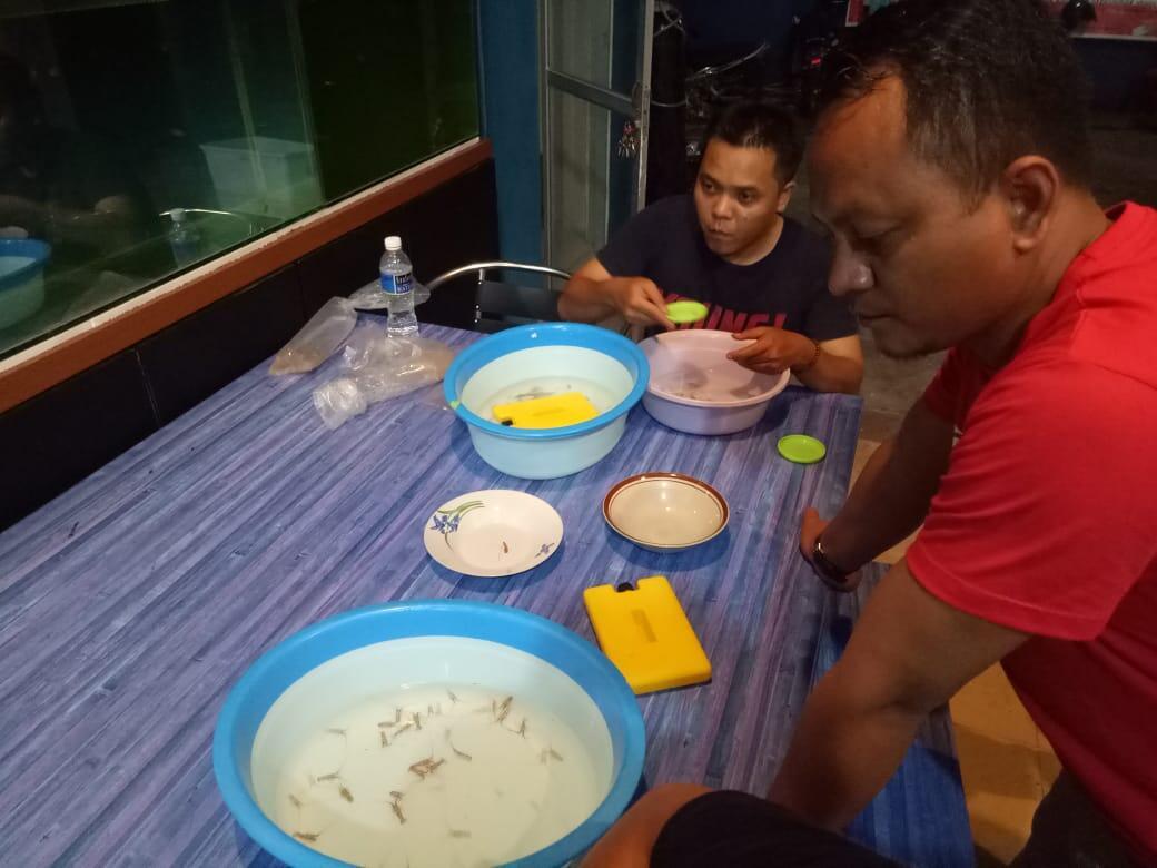 Pemerintah Gagalkan Penyelundupan Benih Lobster Rp13,8 miliar