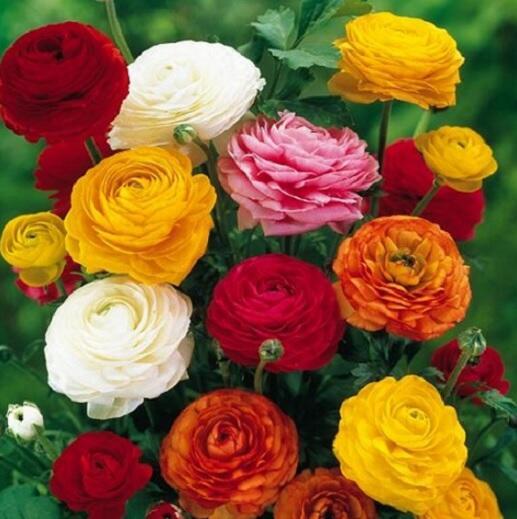 Cantik tapi mematikan hati-hati dengan 3 bunga ini