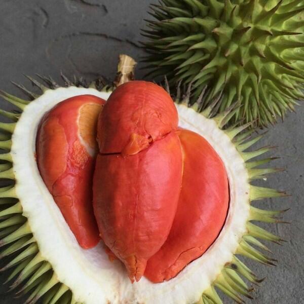 10 Jenis Durian Paling Populer Ini Wajib Masuk List Kulineranmu
