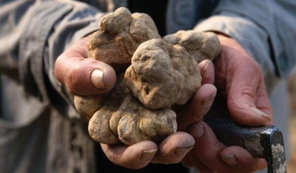 4 Fakta Unik Jamur Truffle, Harganya Bisa Mencapai Miliaran Rupiah