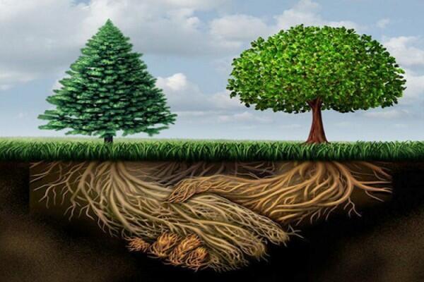 Pohon Juga Punya Jaringan 'Internet' untuk Komunikasi, Ini 5 Faktanya