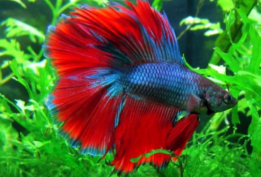 10 Jenis Ikan Hias Terbaik yang Bisa Kamu Pelihara di Aquarium dan Kolam Ikan