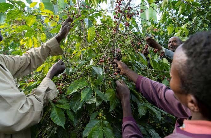 5 Bahan Makanan Yang Terancam Punah Karena Pemanasan Global