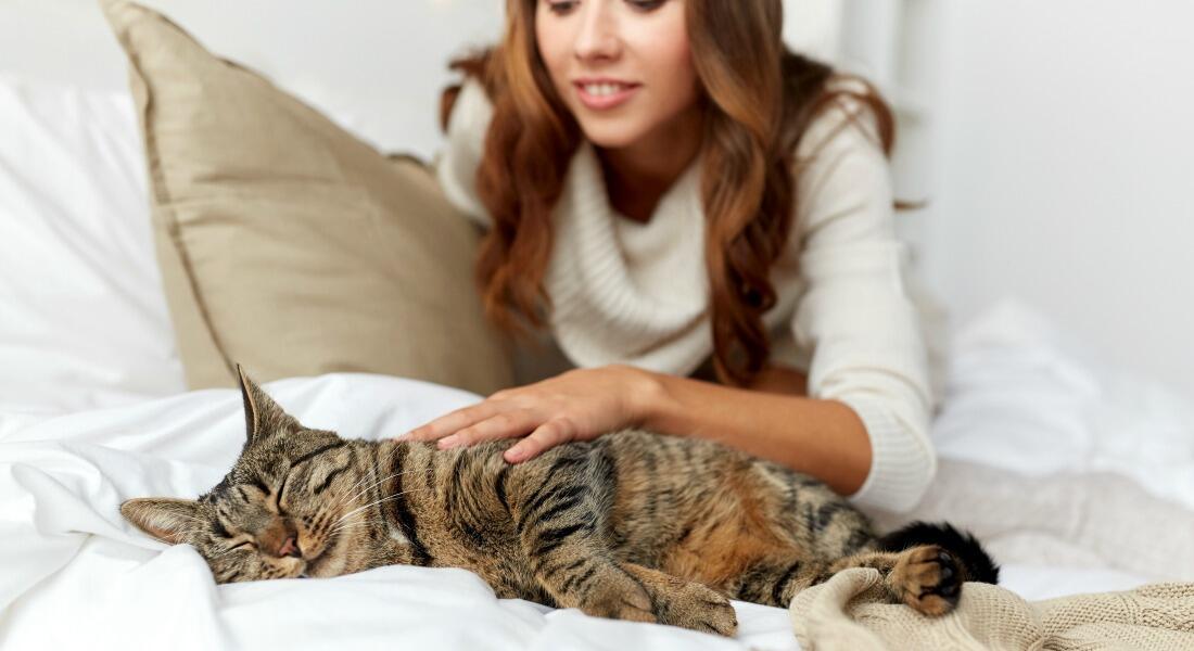 Ternyata Pelihara Kucing bisa Cegah Stroke dan Penyakit Jantung!