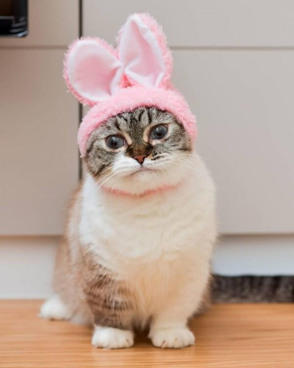 Download 92+  Gambar Kucing Santai Terbaru