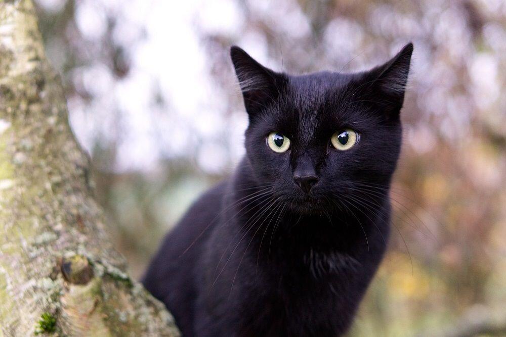 Ini Dia Fakta Unik Kucing Hitam yang Kerap Dianggap Menyeramkan