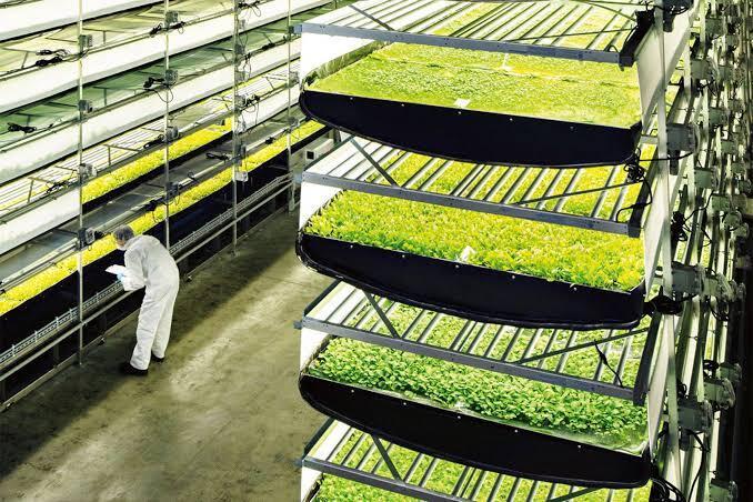 Wah Indahnya! Ini Dia Model Pertanian Kekinian