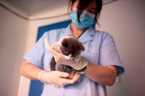 Kucing Kesayangannya Mati, Pengusaha Muda Tiongkok Memilih Kloning