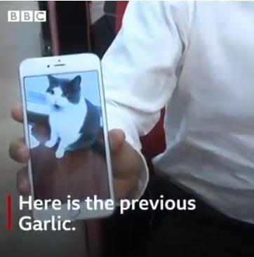 Tiga Puluh Lima Ribu Dollar Biaya Untuk Mengklon Kucing Ini, Hasilnya Kok Begini?