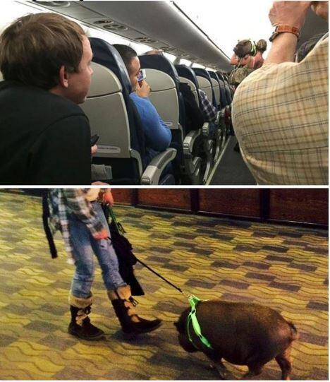 """6 Hewan Peliharaan """"Nyeleneh"""" Yang Pernah Dibawa Traveling Dengan Pesawat"""