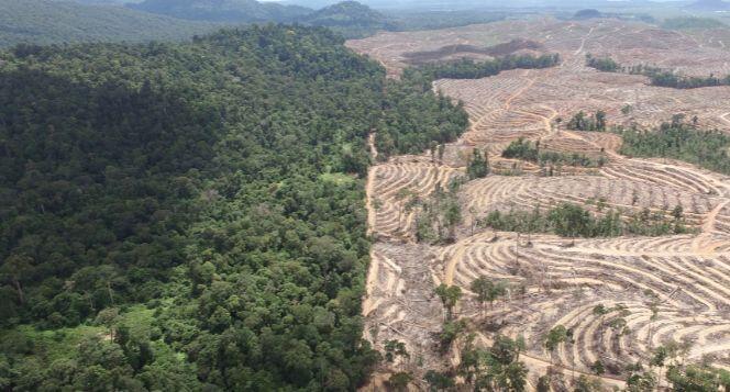 Jika Ibu Kota Pindah Ke Kalimantan, Bagaimana Nasib Hutannya?