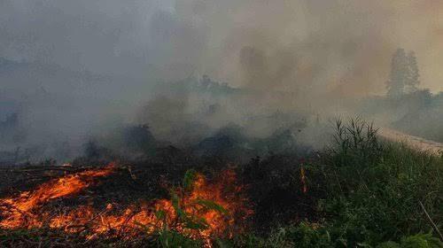 Tegas, Ini Cara Negeri Selangor Malaysia Menghukum Pelaku Pembakaran Hutan dan Lahan