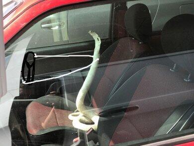 Auto Ngakak! Kalo Foto Ularnya Kaya Gini