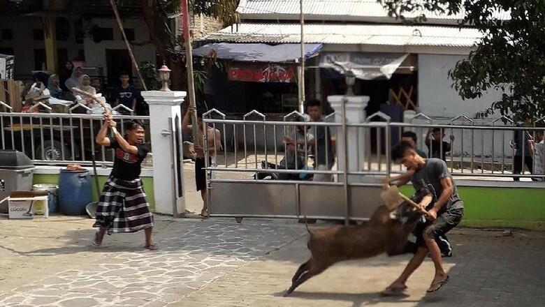 Heboh Babi Masuk Masjid: Ibu-ibu Teriak, Si Babi Mati Ditembak