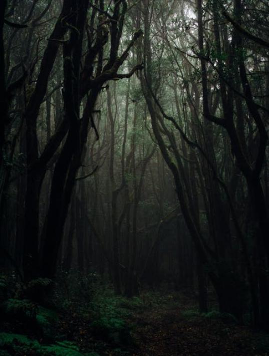 [True Story] Tersesat Di Antara Gunung Kembar dan Bayangan Hitam