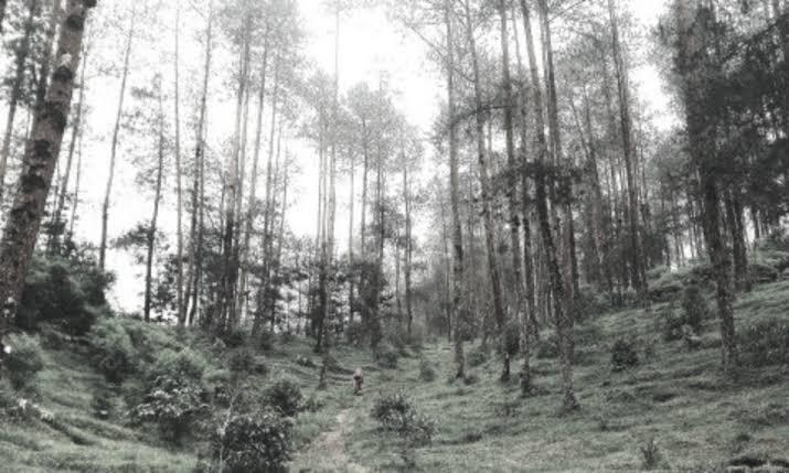Budak Ratu Gunung Merapi