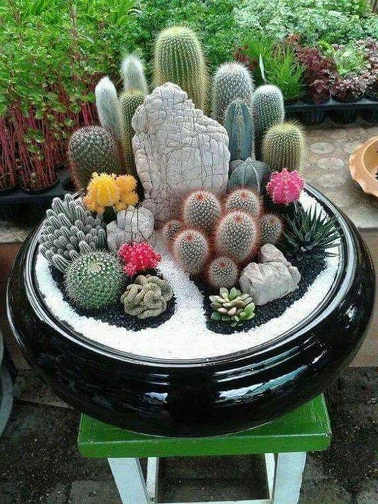 Kaktus, Tanaman Gurun Kaya Manfaat yang Wajib Diketahui