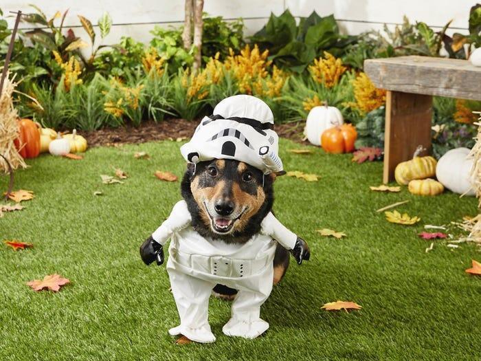 Ide Kostum Halloween Unik Buat Peliharaan Kesayangan, Gemes Banget Gan Sis!