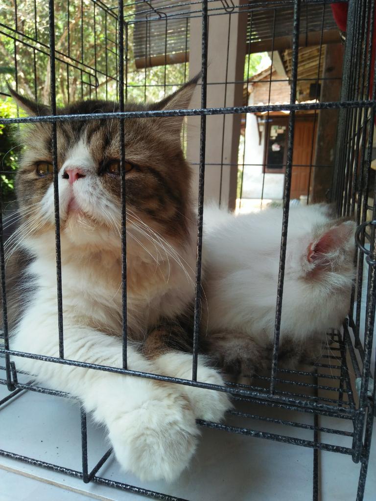 """""""Cat Lovers"""" Melakukan Ini Nih, Sama Hewan Kesayangannya"""