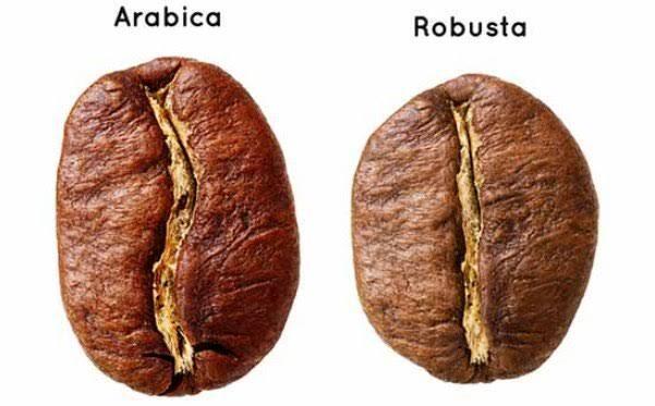 Bingung bedain kopi arabica dan robusta? Berikut beberapa perbedaannya