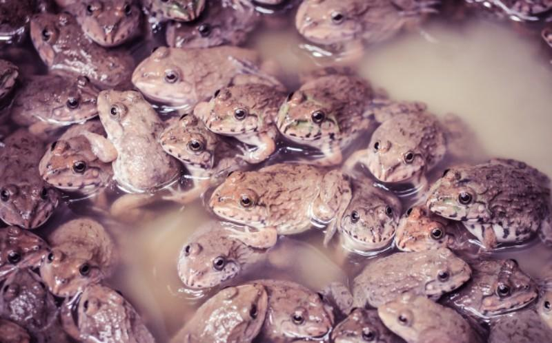 Jangan Kaget, 6 Hewan Menjijikkan Ini Punya Manfaat untuk Kesehatan