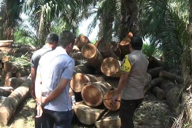 Pembalakan Liar, 1.000 Batang Kayu Log Disita di Tanah Laut
