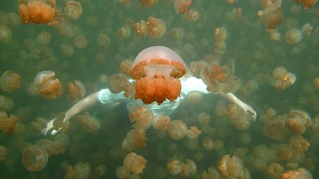 Berlibur dengan Ubur-ubur ala Spongebob di Pantai Ancol, Amankah?
