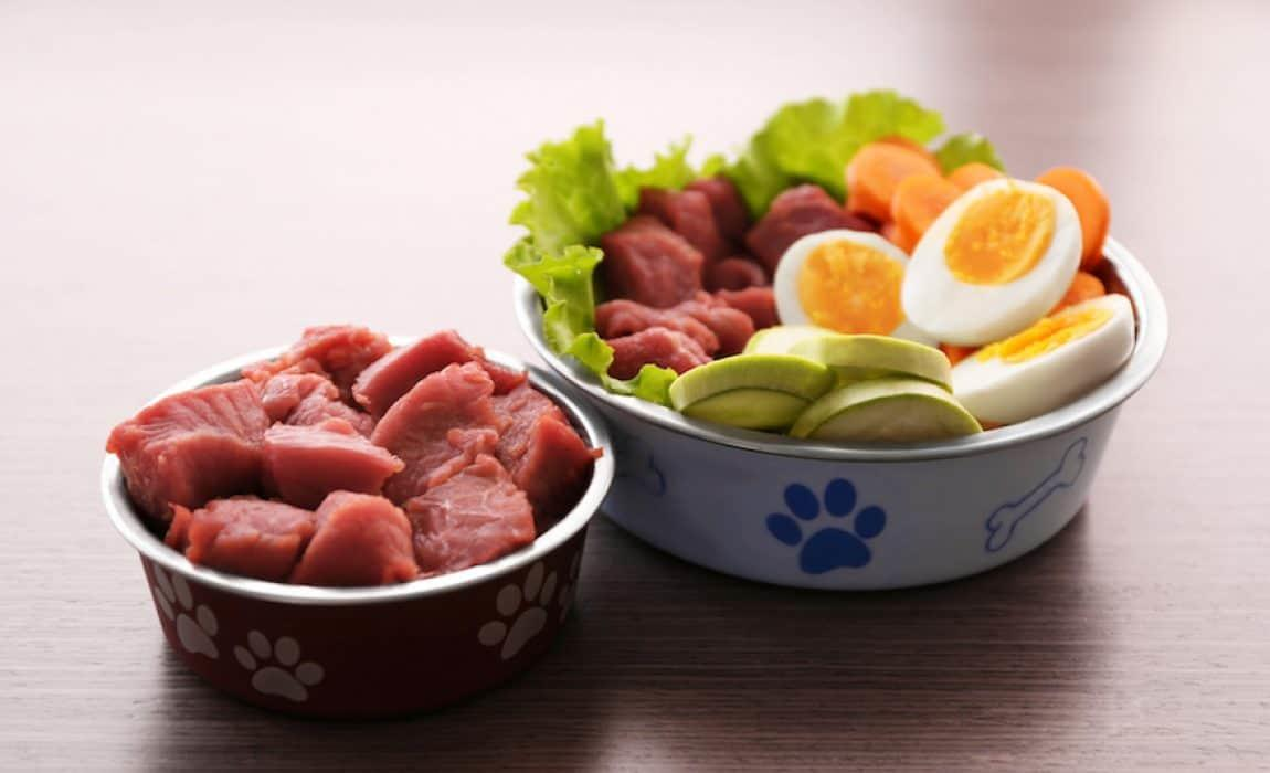 Pro Kontra Raw Food untuk Anjing Kesayangan Anda