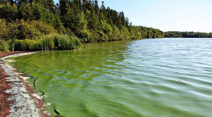 Mengenal Fenomena Alam HABs (Harmful Algae Blooms) Yang Sangat Beracun dan Mematikan