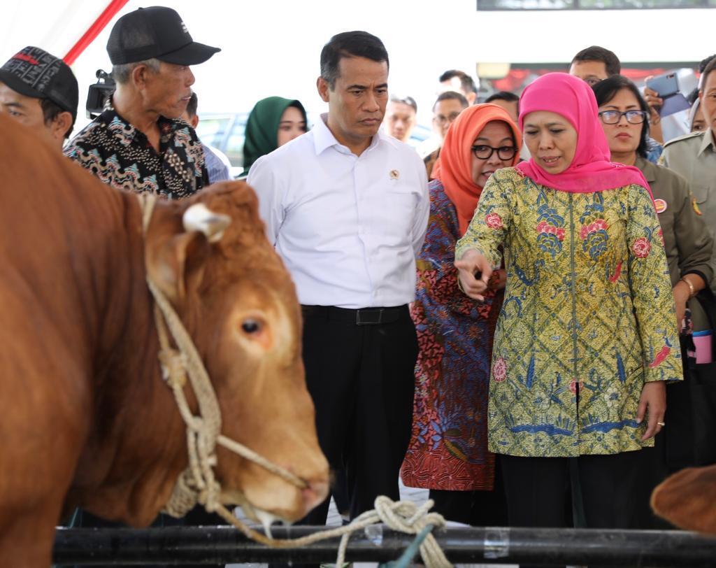 Populasi Sapi Indonesia Meningkat 5 Juta Ekor