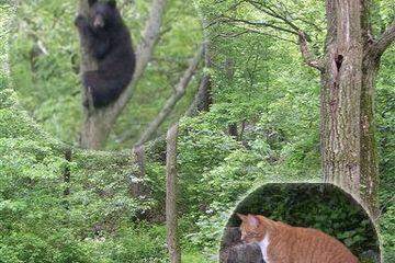 Kocak! Kucing Berani dengan Beruang, Takut dengan Tikus! Tom&Jerry Real Life