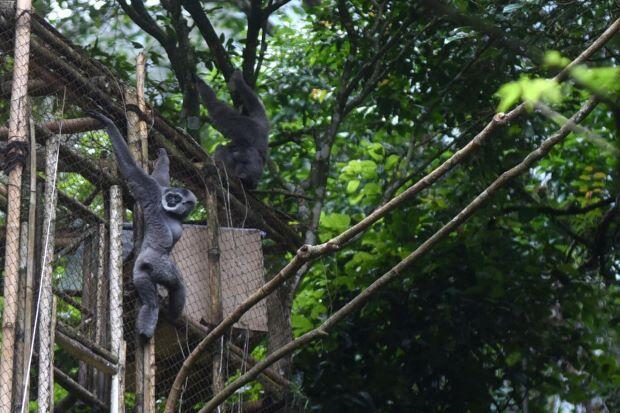 Pertamina Ajak Masyarakat Peduli Alam dan Kenali Owa Jawa di Gunung Puntang