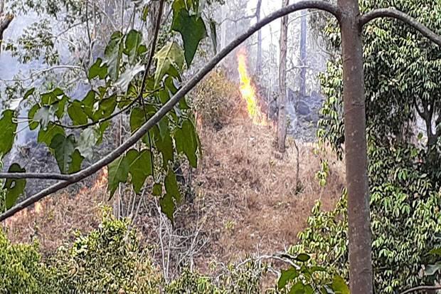 Hutan Lindung Egon Ilinmedo Kembali Terbakar