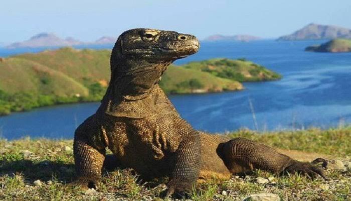 Tak Ada PAD Lainkah Hingga Pulau Komodo Dijadikan Tempat Wisata Ekslusif?