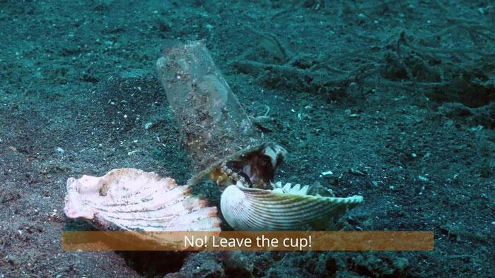 Sedih Gan!!! Bayi Gurita Ini Berlindung Di Gelas Bekas Air Mineral