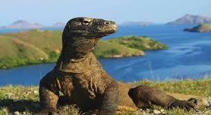 Jurassic Park-nya Indonesia. Rancangan Masa Depan Pulau Komodo dan Wisata Premiumnya