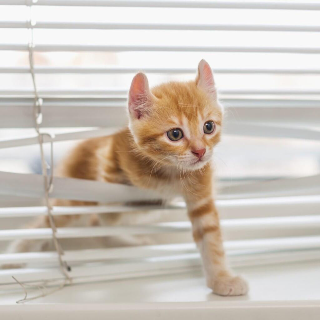 Miaw! Miaw! Miaw! Benda-benda ini Bahaya Buat Kucing!