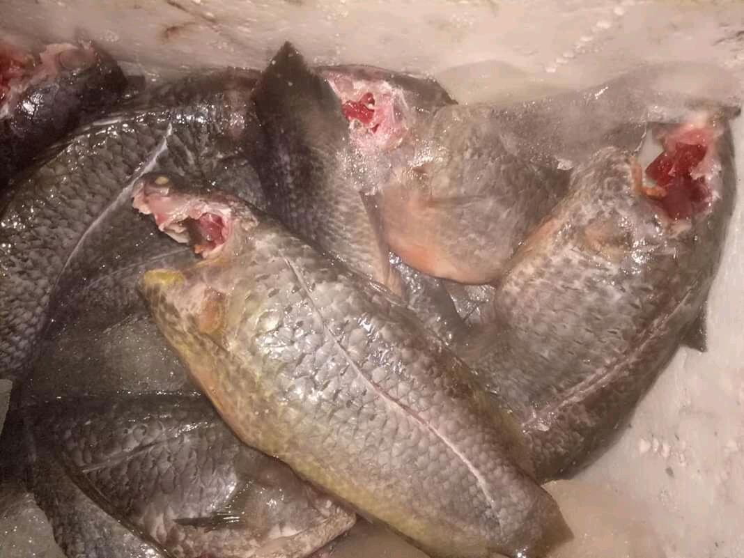 Gangan Ikan Kepuyu dengan Buah Jambu Mete, Masakkan Ala Kampung