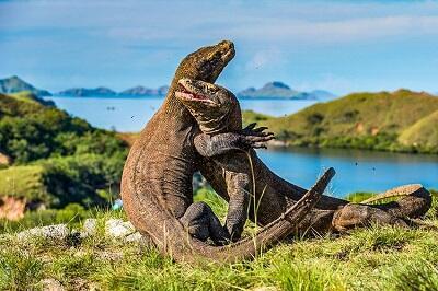 Ini Ternyata Alasan Konservasi Pulau Komodo