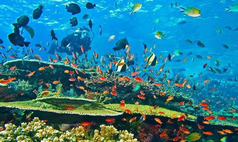 Pulau Komodo Hanya Khayalan Jika Harga Tiket Mahal