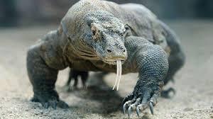 Komodo, Jejak Purba yang Istimewa