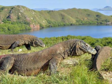 Siapa Bilang Pulau Komodo Mau Ditutup?
