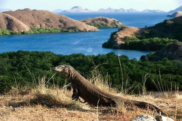 Penetapan Wisata Premium, Masih Bisakah Menjejakkan Kaki ke Pulau Komodo?