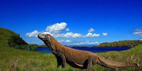Rp 14 Juta/Orang Untuk Sensasi Sejenak Bersama Makhluk Prasejarah