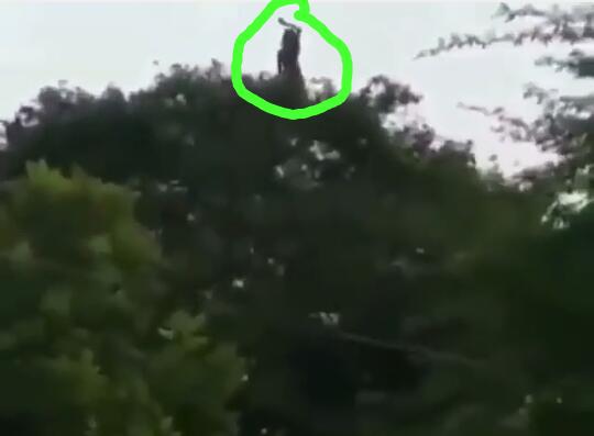 Heboh, Video Misterius Seorang Wanita Menari di Atas Pohon! Siapakah Dia Sebenarnya?