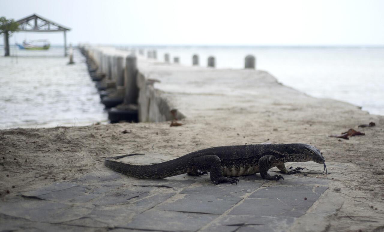 Asyiknya Mengunjungi Wisata Pulau Biawak di Indramayu Jawa Barat!
