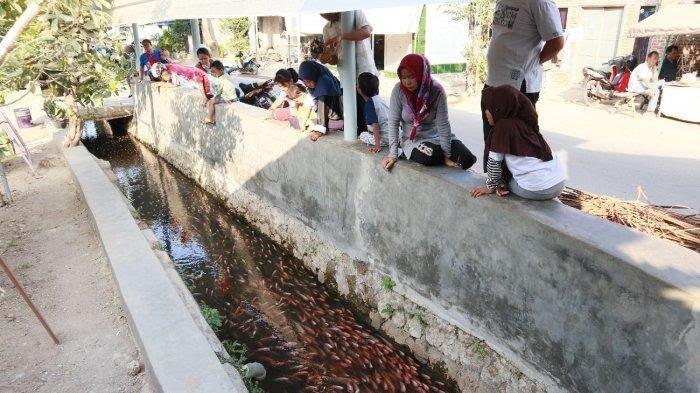 Viral! Selokan Dengan Ribuan Ikan Hias di Cirebon, Jadi Tempat Indah Untuk Berfoto!