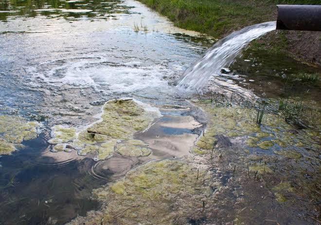 Sungai Ini Dulunya Tercemar Berat Tetapi Sekarang Menjadi Rumah Anjing Laut, Keren!